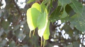 Blätter stock footage
