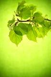 Blätter. Lizenzfreies Stockbild