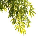 Blätter. Stockfoto