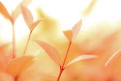 Blätter Lizenzfreie Stockfotografie