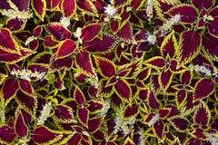 Blätter Stockbilder