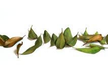 Blätter Stockfoto
