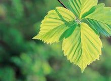 Blätter Lizenzfreie Stockbilder
