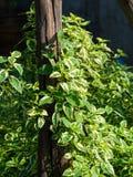 Blätter stockbild