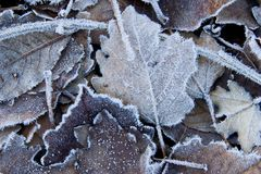 Blätter abgedeckt im Frost stockbild