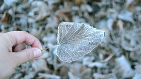 Blätter abgedeckt mit Frost, Abschluss oben stock footage