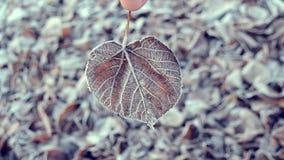 Blätter abgedeckt mit Frost, Abschluss oben stock video