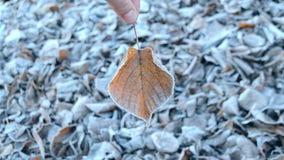 Blätter abgedeckt mit Frost, Abschluss oben stock video footage