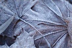 Blätter abgedeckt mit Frost, Abschluss oben Lizenzfreie Stockfotos