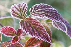 Blätter abgedeckt mit Hoarfrost lizenzfreie stockfotografie