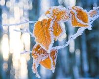 Blätter abgedeckt mit Schnee Stockbilder