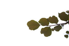Blätter auf Ast stockfoto