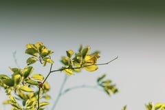 Blätter auf Bäumen Stockfotografie