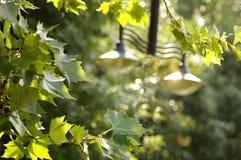 Blätter auf Baum Stockfotos