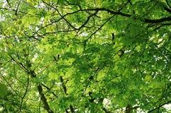 Blätter auf Baum lizenzfreies stockbild