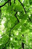 Blätter auf Baum lizenzfreie stockbilder