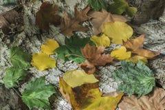 Blätter auf Birkenrinde Stockfotografie