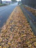 Blätter auf dem Bürgersteig Lizenzfreie Stockfotografie
