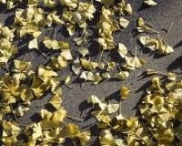 Blätter auf dem Bürgersteig Stockfotografie