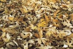 Blätter auf dem Boden im Herbst Stockfotos