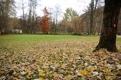 Blätter auf dem Fußboden Lizenzfreie Stockbilder