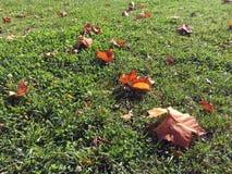 Blätter auf dem Gras im Herbst Stockfotos