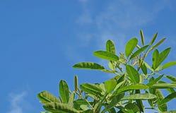 Blätter auf dem Himmel Lizenzfreies Stockbild