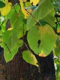 Blätter auf dem Hintergrund eines braunen Baumstammes stockfoto