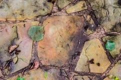 Blätter auf dem Steinhintergrund Stockbilder