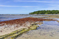 Blätter auf dem Strand, in Boipeba-Insel Salvador, Brasilien Lizenzfreie Stockfotos
