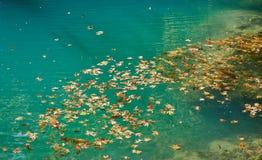 Blätter auf dem Wasser Lizenzfreies Stockbild