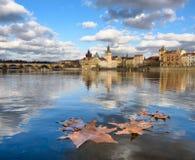 Blätter auf dem Wasser Stockfotografie