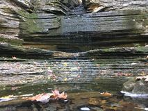 Blätter auf dem Wasser Lizenzfreie Stockbilder