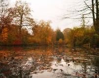 Blätter auf dem Wasser in herbstlichem Yorkshire-Skulpturenpark stockbilder
