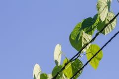 Blätter auf den Drähten auf Himmelhintergrund Lizenzfreie Stockfotografie