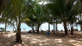 Blätter auf den Sand- und Kokosnusspalmen auf dem Strand, Asien stockfoto