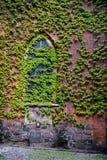 Blätter auf der Backsteinmauer Lizenzfreie Stockfotografie