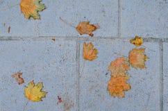 Blätter auf der Pflasterung Stockbild