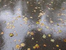 Blätter auf der Pflasterung Stockfoto
