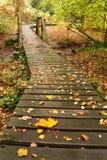 Blätter auf der Promenade Lizenzfreie Stockfotos