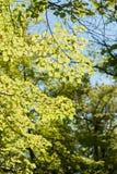 Blätter auf der Sonne Stockbilder