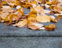 Blätter auf der Straße stockbilder