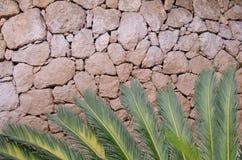 Blätter auf der Wand Lizenzfreies Stockfoto