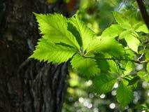 Blätter auf einem Baum in den botaniclal Gärten in Athen, Griechenland stockfotos