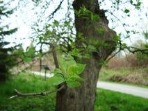 Blätter auf einem Baumast stockbilder