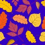 Blätter auf einem dunkelblauen Stockfotos