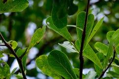 Blätter auf einem grünen Hintergrund stockbilder