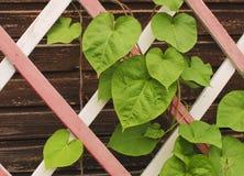Blätter auf einem hölzernen Gitter Lizenzfreies Stockbild