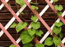Blätter auf einem hölzernen Gitter der Veranda stockfotografie