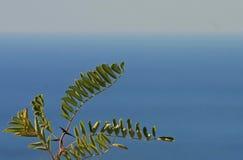 Blätter auf einem Hintergrund des blauen Himmels stockfoto